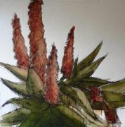 CON MM: Aloes II